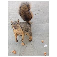 squirrel'n around Poster