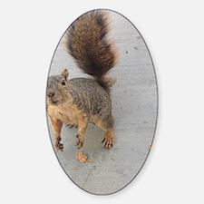 squirrel'n around Decal