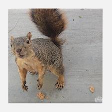 squirrel'n around Tile Coaster