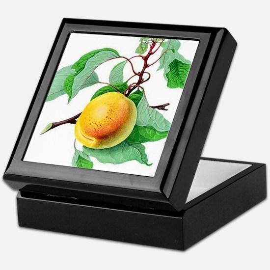 Apricot Keepsake Box