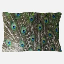 Peacock Feathers Pillow Case