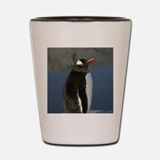 Gentoo Penguin Shot Glass