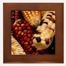 Dried up Fall Corn Framed Tile