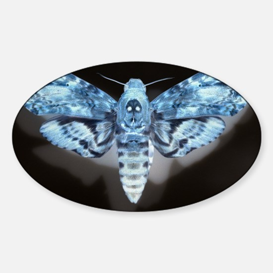 Moth Sticker (Oval)