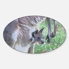 Joey in Mothers Pouch Decal