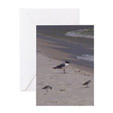 3 Pipers and a Gull Greeting Cards