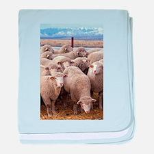 Sheep Herd baby blanket