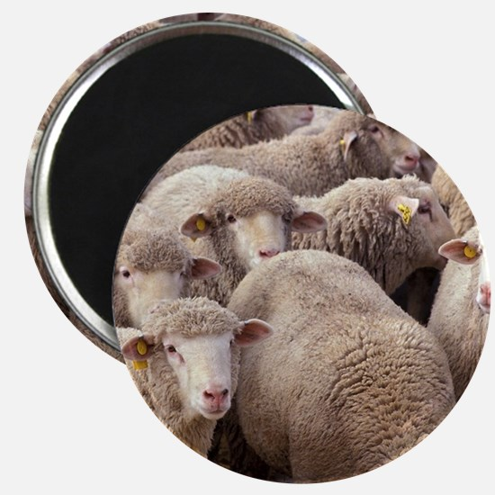 Sheep Herd Magnets