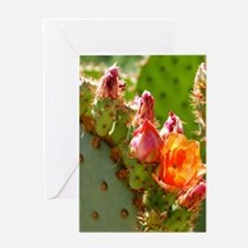 Prickly Pear Blooms Greeting Cards