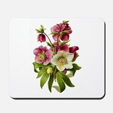 Purple and White Hellebores Mousepad
