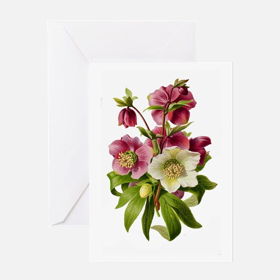 Purple and White Hellebores Greeting Card