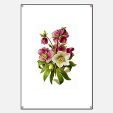 Purple and White Hellebores Banner