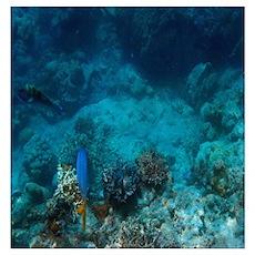 Underwater Sealife Poster