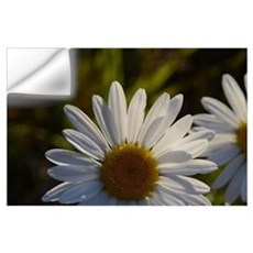 Wild Daisies Wall Decal