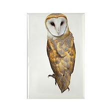 Barn Owl Rectangle Magnet