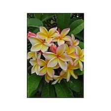 Hawaiian Plumeria Rectangle Magnet