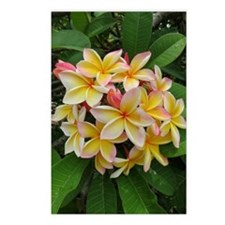 Hawaiian Plumeria Postcards (Package of 8)