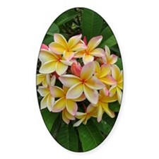 Hawaiian Plumeria Decal