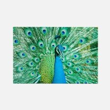 Beautiful Peacock Magnets