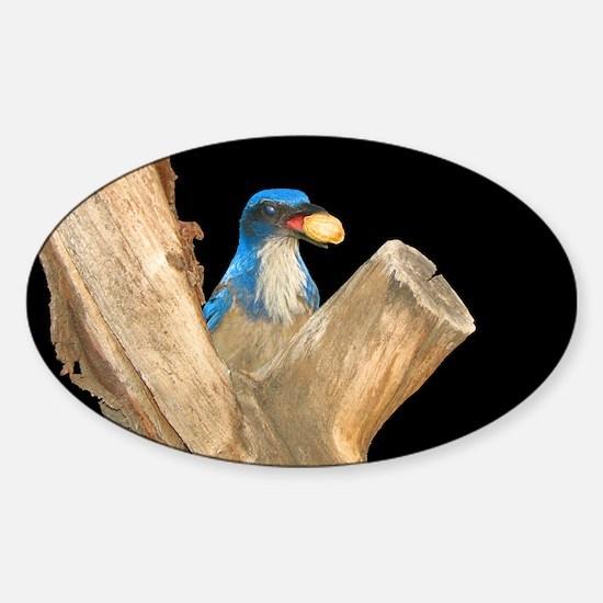 Golden Peanut Blue Jay Decal
