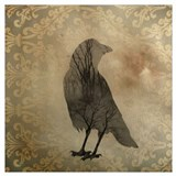 Black crow Framed Prints