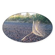 Morning Dandelion Seeds Decal