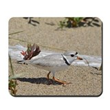 Piping plover Classic Mousepad