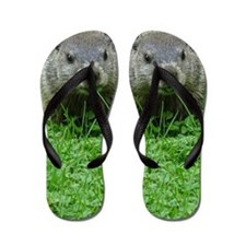 Woodchuck eating Flip Flops