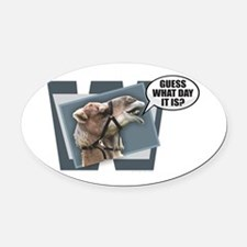 Cute Hump day camel Oval Car Magnet