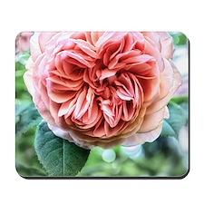 Peach Centrifolia Rose Mousepad