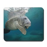 Baby manatee Mouse Pads