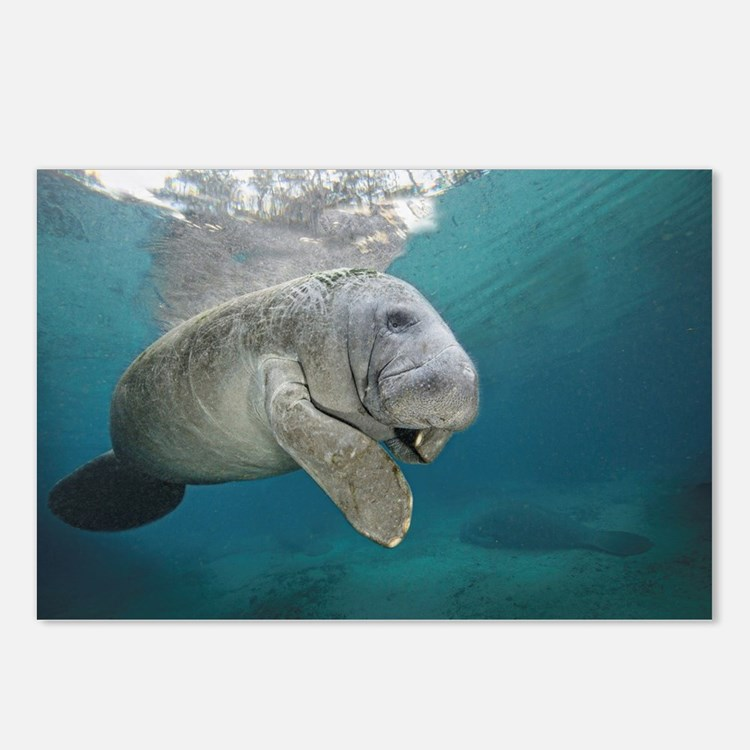 Cute Marine mammals Postcards (Package of 8)