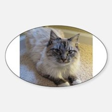 birman laying blue lynx point mittened Decal