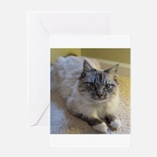 birman laying blue lynx point mittened Greeting Ca