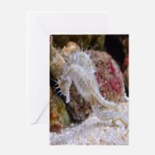Seahorse Gifts Greeting Cards