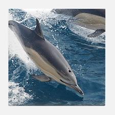 Common Dolphin Tile Coaster