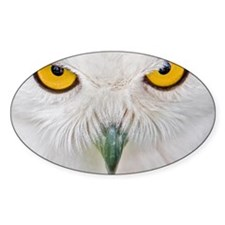 Owl with yellow eyes Decal
