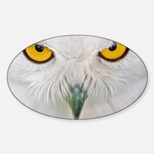 Owl with yellow eyes Sticker (Oval)