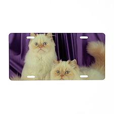 Cats Cute Twin Kittens Aluminum License Plate
