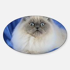 Cute Himalayan Cat Decal