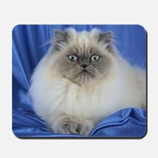 Cute Funny Himalayan Cat Mousepad