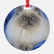 Cute Funny Himalayan Cat Ornament