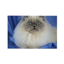 Cute Funny Himalayan Cat Magnets