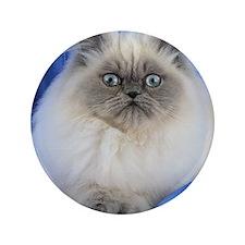 Cute Funny Himalayan Cat Button