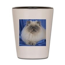 Cute Funny Himalayan Cat Shot Glass