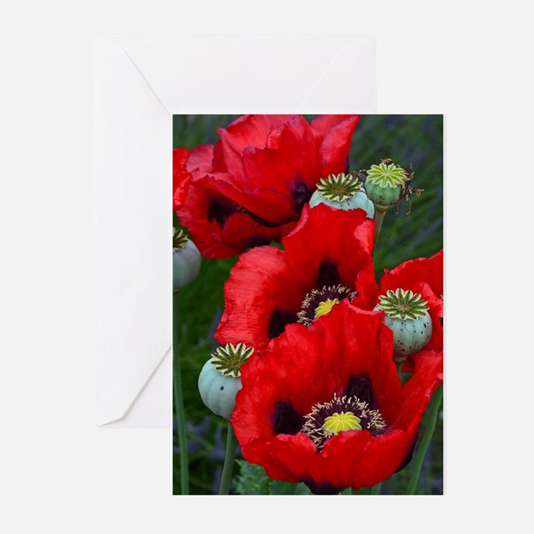 Red poppy flowers Greeting Cards
