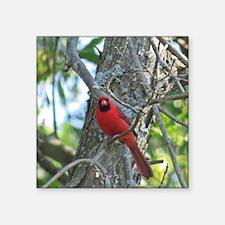 Male Cardinal Sticker