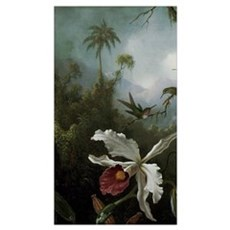 Hummingbirds Above a White Orchid Poster