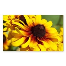 Yellow Coneflowers Decal