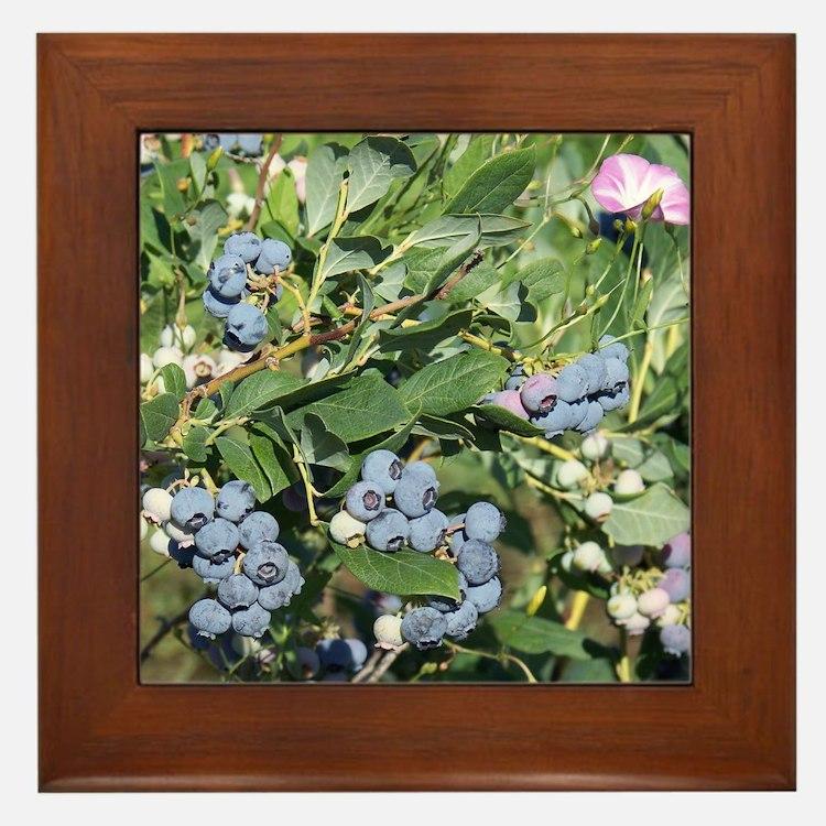 Blueberries and Morning Glories Framed Tile